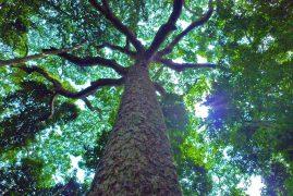 De dansande andarnas skog - image 6
