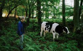 Bild föreställade man och ko i skog från filmen Säsong
