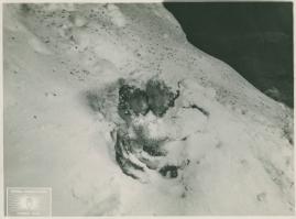 Berg-Ejvind och hans hustru - image 70