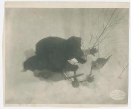 Kärlek och björnjakt - image 1