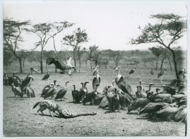 Bland vildar och vilda djur : Svenska Biografteaterns expedition till Brittiska Ostafrika åren 1919-1921 - image 5