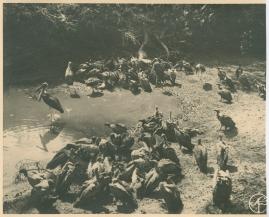 Med Prins Wilhelm på afrikanska jaktstigar - image 68