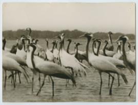 Som flyttfågel i Afrika - image 4