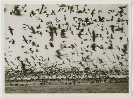 Som flyttfågel i Afrika - image 5