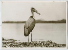 Som flyttfågel i Afrika - image 9