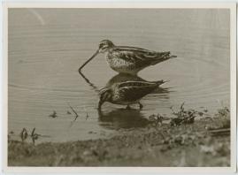 Som flyttfågel i Afrika - image 12