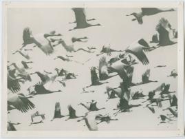 Som flyttfågel i Afrika - image 11