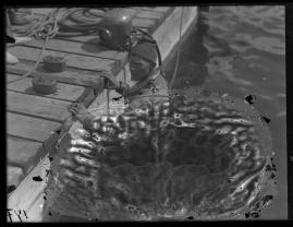 Mälarpirater - image 37