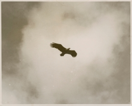 Sagan om de sista örnarna - image 26