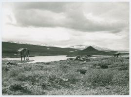 I fjällfolkets land : Dagar i Lappland hos Inka Länta och hennes fränder - image 15