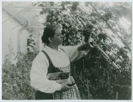 Den gamla herrgården - image 20