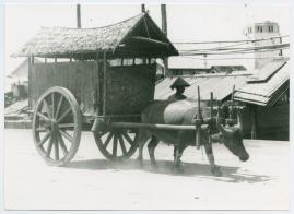 Bland malajer på Sumatra - image 27