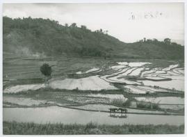 Bland malajer på Sumatra - image 105