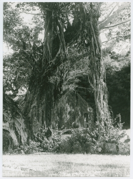 Bland malajer på Sumatra - image 78