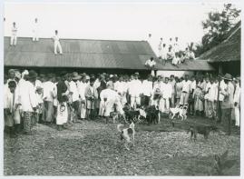 Bland malajer på Sumatra - image 79