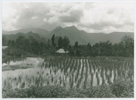 Bland malajer på Sumatra - image 110