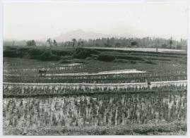 Bland malajer på Sumatra - image 55
