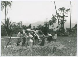 Bland malajer på Sumatra - image 58