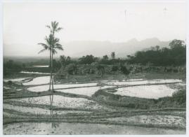 Bland malajer på Sumatra - image 59