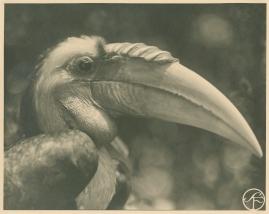 Bland malajer på Sumatra - image 94