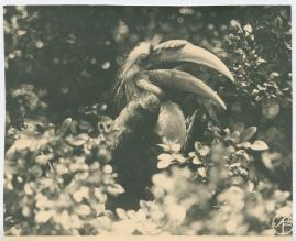Bland malajer på Sumatra - image 125