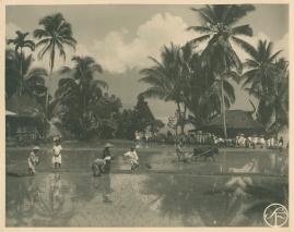 Bland malajer på Sumatra - image 21