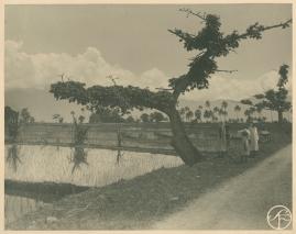 Bland malajer på Sumatra - image 97