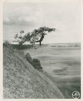 Kronans kavaljerer - image 90