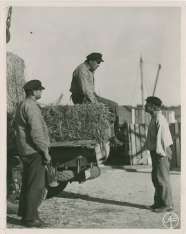 Skepparkärlek : En hamnhistoria om gungande gastar - sjungande skeppare - snoppade smugglare - carnegie och kärlek - image 68