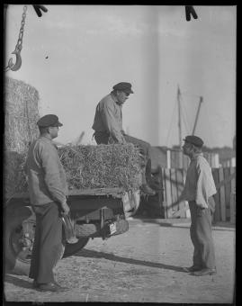 Skepparkärlek : En hamnhistoria om gungande gastar - sjungande skeppare - snoppade smugglare - carnegie och kärlek - image 136