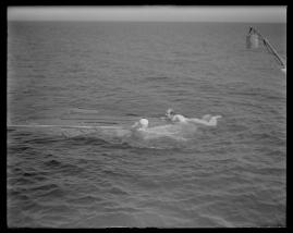 Styrman Karlssons flammor : En sjömans äventyr till lands och vatten - image 268
