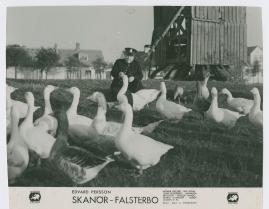 Skanör-Falsterbo - image 66