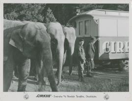 Cirkus - image 28