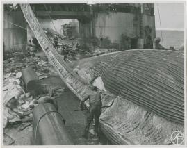 Valfångare - image 74