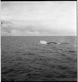 Valfångare - image 282