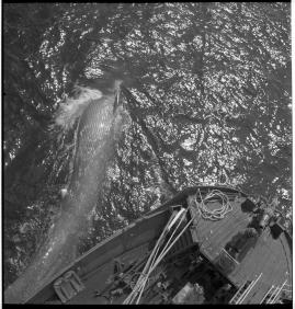Valfångare - image 132