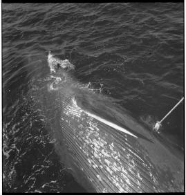 Valfångare - image 133