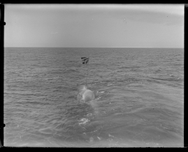 Valfångare - image 284