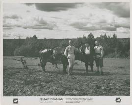 Snapphanar - image 46