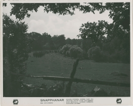 Snapphanar - image 19