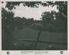 Snapphanar - image 17