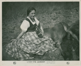 Livet på landet - image 54