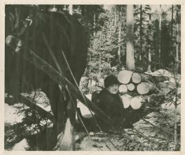Skogen är vår arvedel - image 11