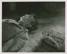 Stig Olin - image 8