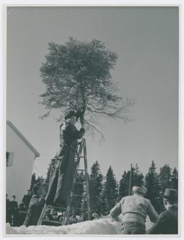Rötägg - image 24