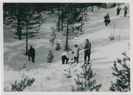 Rötägg - image 29