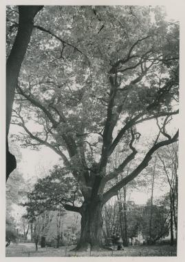 Djurgårdskvällar - image 60