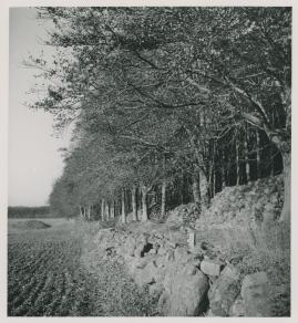 Djurgårdskvällar - image 23