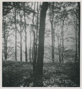 Djurgårdskvällar - image 7